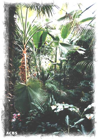 Natures, Tropical forest.